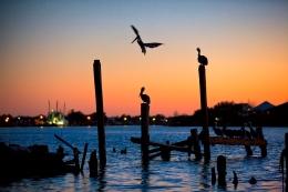 pelican sunset no logo