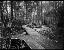 web trail 1